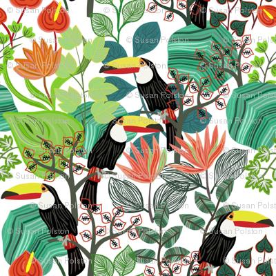 Toucan Paradisio
