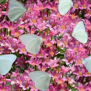 Crocus Patch with Butterflies