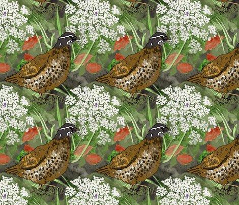 Queen_anne_quail_3_shop_preview