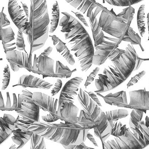 Black & White - Floral Tropical Leaves / White Background