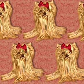 Yorkie in red