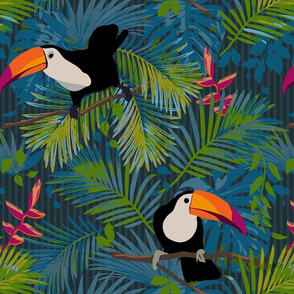 Rainforest Toucans