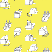 cats in boxes in yellow