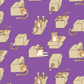 cats in boxes in purple