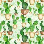 watercolor western flowers, cactus, tropical