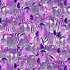 Zebra Stripes in Red Violet - SMALL