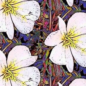 Utah desert flower