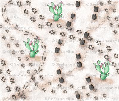 Desert Animal Footprints