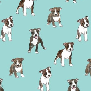Lots of Little Boston Terrier Puppies on teal
