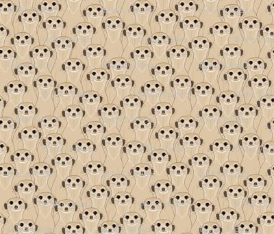 Meerkats_Kalahari Desert_100%