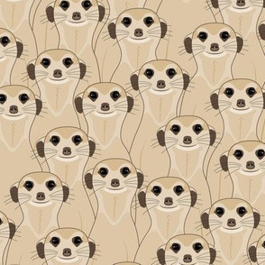 Meerkats_Kalahari Desert