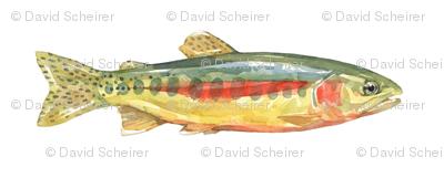 Golden Trout Watercolor