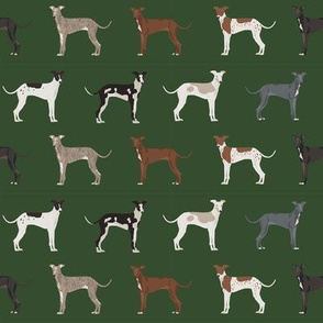 italian greyhound fabric - cute dogs coat colors and markings dog fabric design