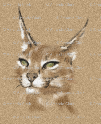 Caracal in Sand