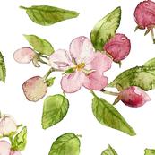 Watercolor Apple Blossoms