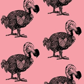 dodopink