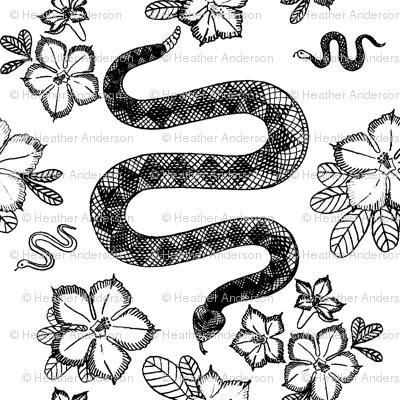 Rattlesnakes & Desert Roses
