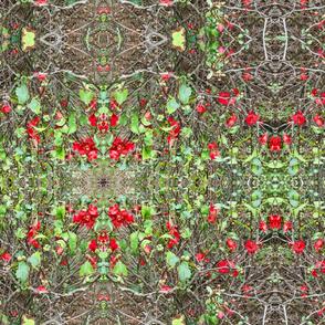 Red Salvia Runner