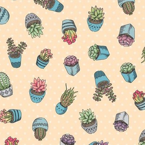 Cute Succulents