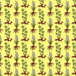 yellow_yucca_yam_4x4