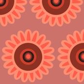 coral daisy