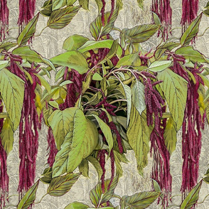 amaranth-_love_lies_bleeding