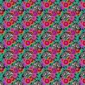 Zebra_zinnia_zomp_5_4x4_shop_thumb