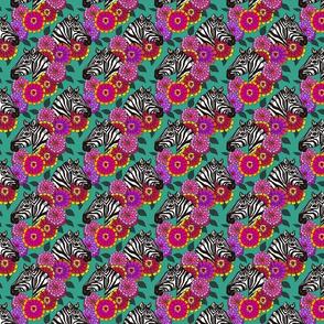 zebra_zinnia_zomp_5_4x4