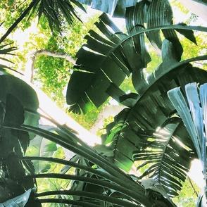 TropicalLife