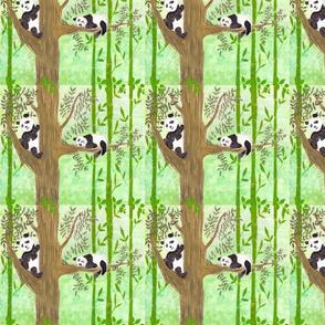Minshan Mountain Pandas