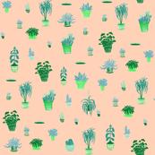 Orange and Mint plants