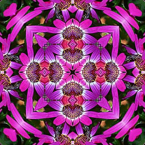 Magenta Floral Abstract