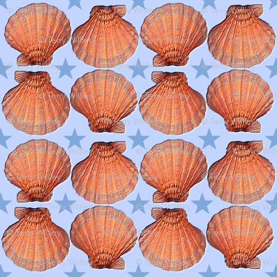 Marine Scallops; Medium