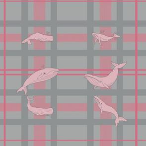 whalewallpaperdonePINK