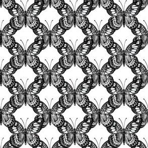 B&W Butterfly Trellis on white