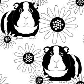 guinea-pigs-and-daisies-black-and-white