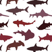 Red sharks