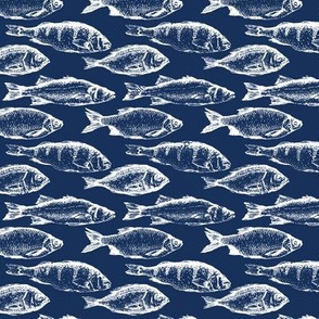 Fish Sketches on Navy // Small