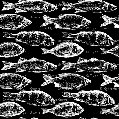 Fish Sketches on Black // Small