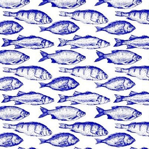 Blue Fish Sketches