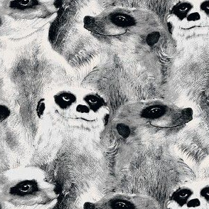 B&W Meerkats
