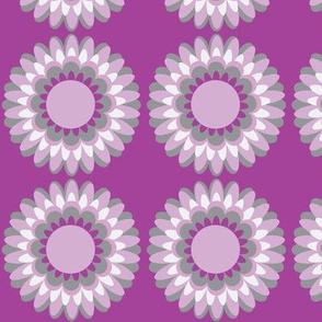 lilac pop dahlia