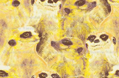 Yellow Meerkats