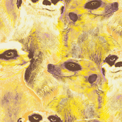 Yellow Meerkats