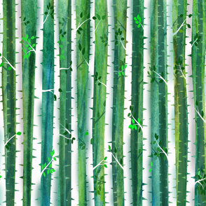 Birch_Forest_300_large 54x36