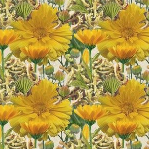 calendula-seeds2