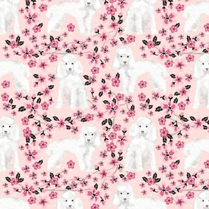 toy poodle cherry blossom fabric spring floral dogs design - pink