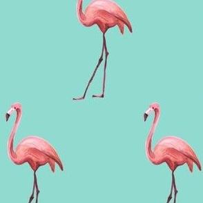 Flamingo - Light Aqua