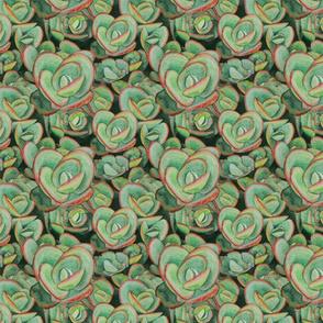 Lime Zinger Sedum