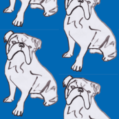Bulldog Blue
